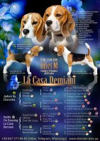 image demiani-pedigree-m_1588058892-jpg