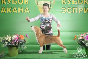 """Verona Sanvita, выставка """"Акана"""" 23.02.2013 г"""