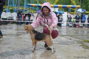 Beagle-02-04